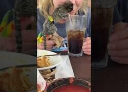 Enlace a Un pequeño mono intenta beber un refresco