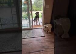 Enlace a Una puerta abierta confunde a este perro