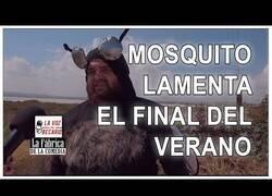 Enlace a Mosquito lamenta el final del verano