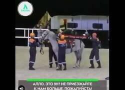 Enlace a La razón por la que no se emplean caballos para hacer de ambulancia