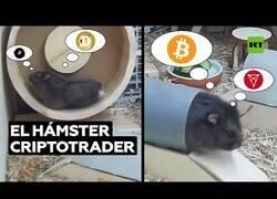 Enlace a El hámster 'trader' que compra y vende criptomonedas