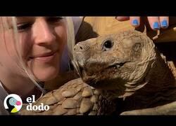 Enlace a Así es tener de mascota a una tortuga de 80 kilos