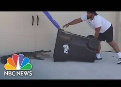 Enlace a Un hombre atrapa un cocodrilo con un cubo de basura