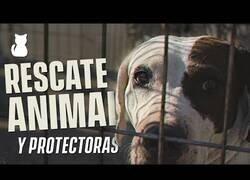 Enlace a Así funciona una protectora de animales