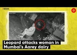 Enlace a Un leopardo ataca a una anciana en Bombay