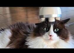Enlace a Un gato disfruta de un relajante masaje en la cabeza
