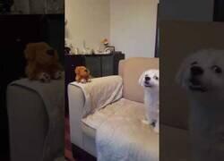 Enlace a Un perro real mantiene una conversación con un perro de juguete