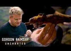 Enlace a El Chef Ramsay prueba en Perú la cobaya a la brasa