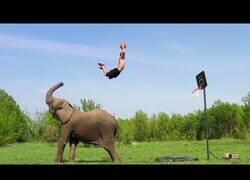 Enlace a Increíbles mates de basket con la ayuda de un elefante