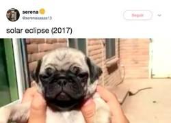 Enlace a El eclipse de Sol explicado por perretes es el vídeo que te hará feliz hoy, por @serenaaaaaa13
