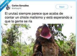 Enlace a El urutaú es el pajaro con más MOODS posibles del mundo, por @carlosgnfd