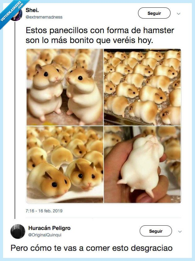 adorable,bocao,hamster,imposible