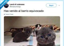 Enlace a CATKINGS la banda mas chunga del barrio, por @landpsychology
