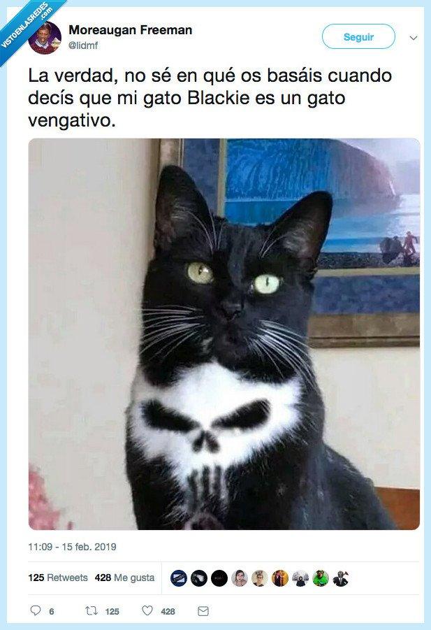 cara adorable,el castigador,gato