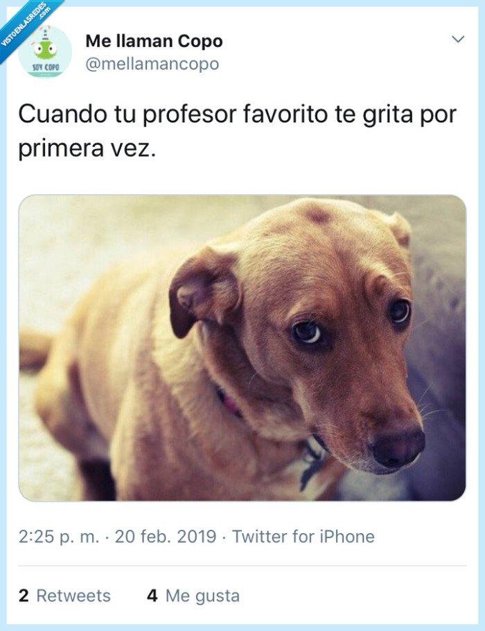 colegio,perro,Profesor,triste