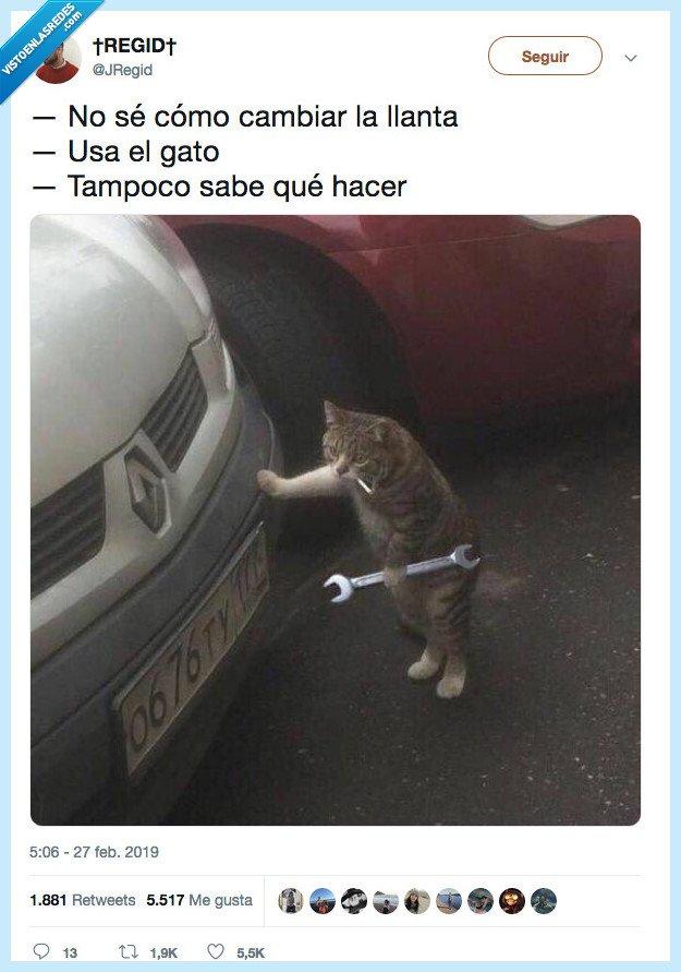gato,no,uitlizar
