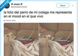 Enlace a Ese perro soy yo, por @MOONEMOTlCON