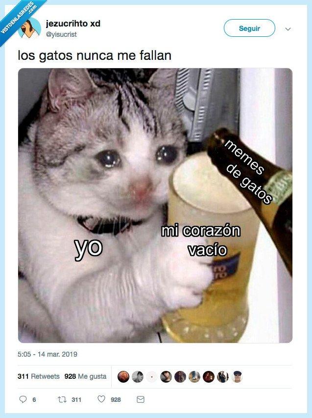 corazon,memes y gatos