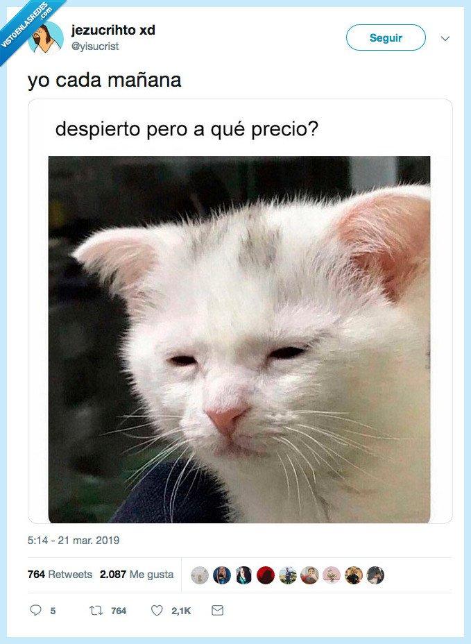 gato,representar,vida