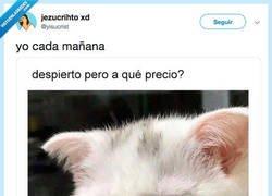 Enlace a Este gato me representa en la vida, por @yisucrist