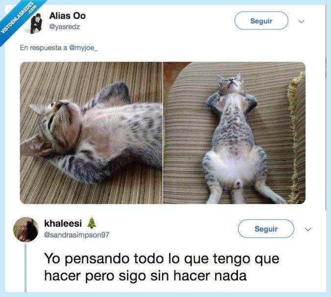 soyyy,vida,yo