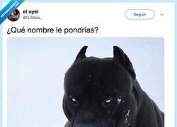 Enlace a ¿Que nombre le pondrías a este perrete?, por @OJMata_