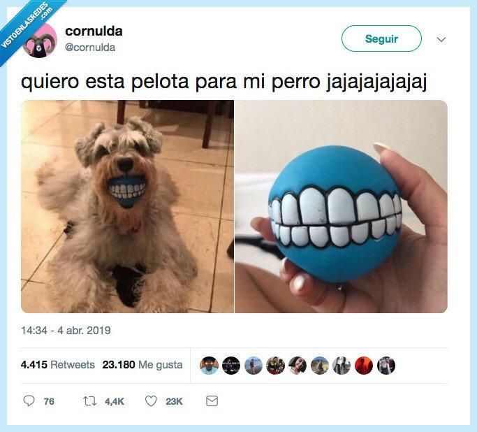 pelota,perro,todo