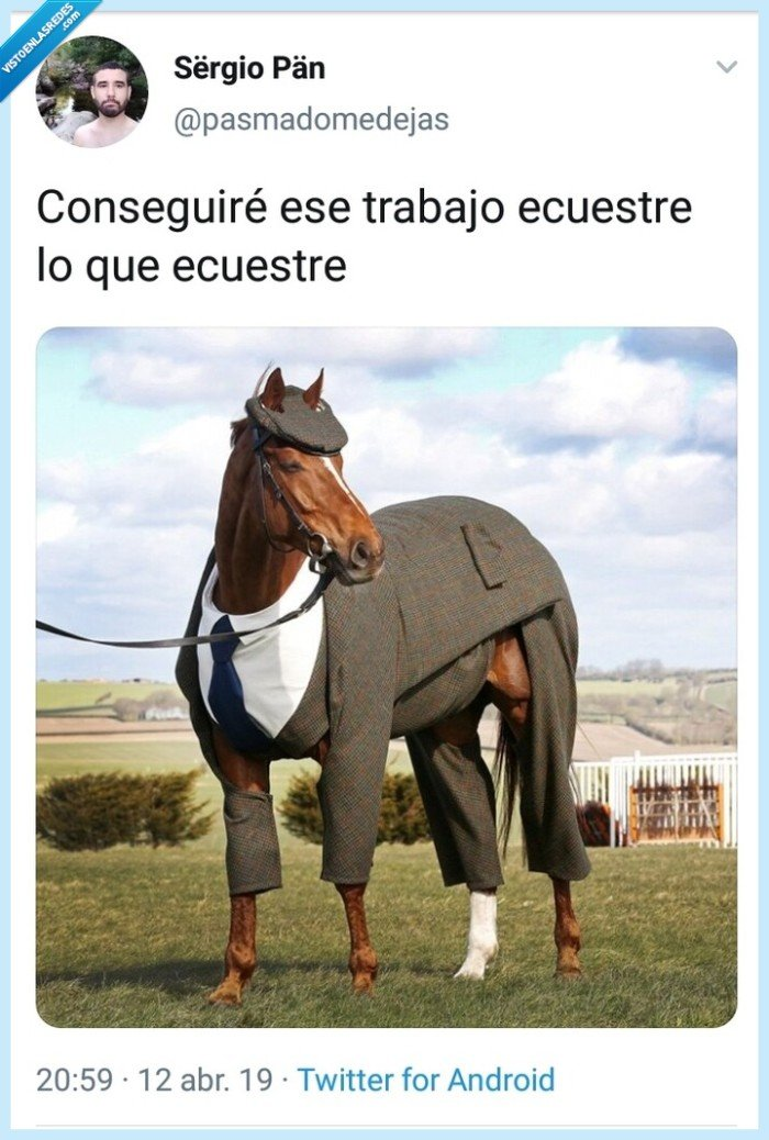 caballo,ecuestre,Humor,trabajo,Twitter