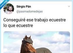 Enlace a Horse Luis busca empleo, por @pasmadomedejas
