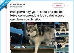 Enlace a Mi animal espiritual, por @victor_hurtado