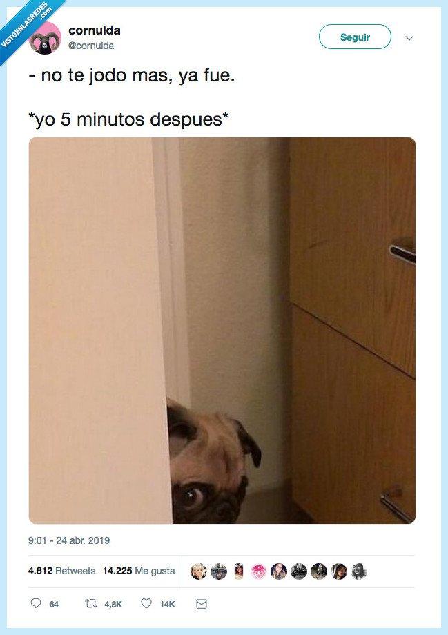 mas,minutos,perrete