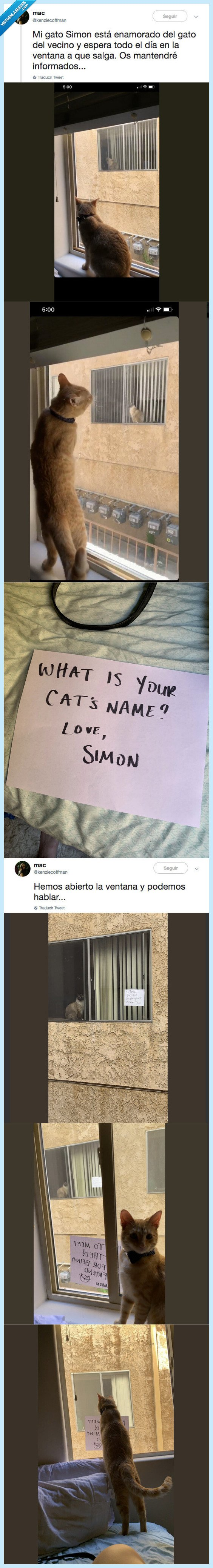 amor,gato,internet
