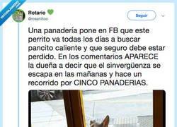 Enlace a El perro más sinvergüenza del mundo, por @rosariiitoo