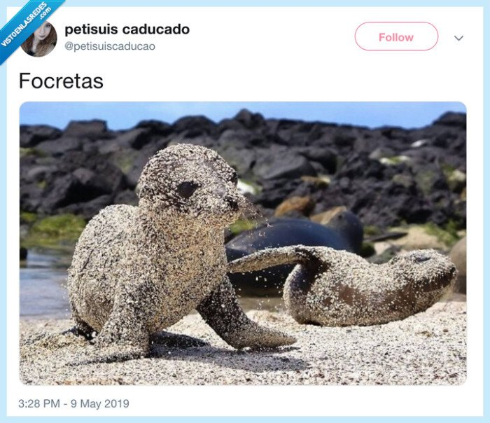 croqueta,foca,focreta