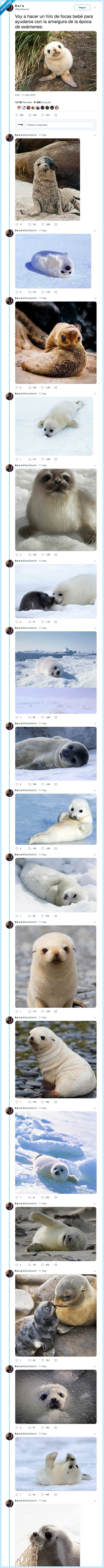 epoca exámenes,foca,hilo,me flipan las focas