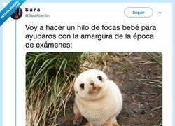 Enlace a Un hilo de focas para daros fuerza en la época de exámenes, por @SaraAbentin