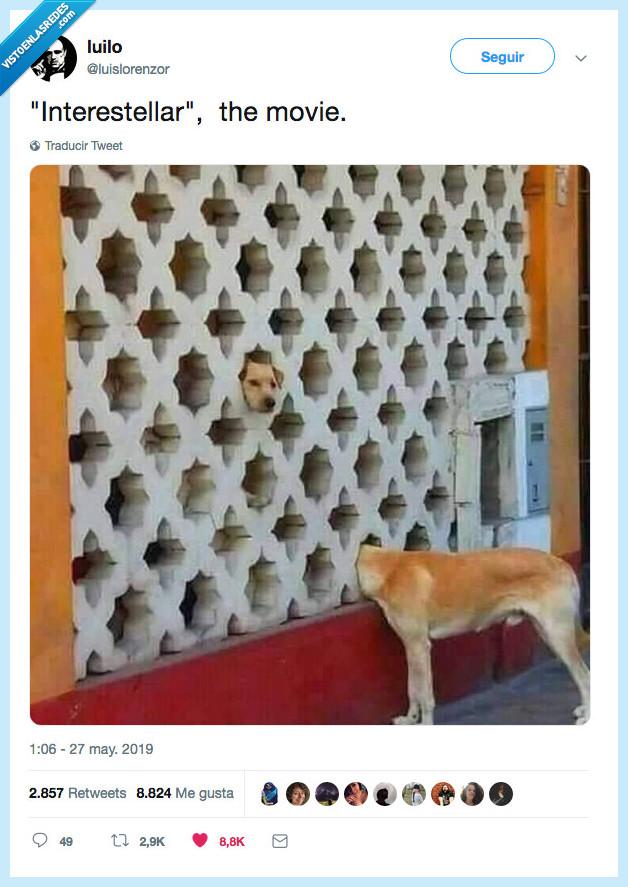 interestellar,pelicula,perro