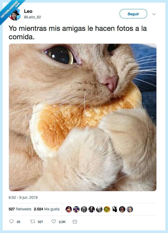 amiga,comida,fotos,gato