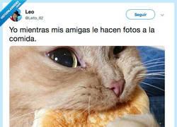 Enlace a A COMEEEEEER, por@Leito_82