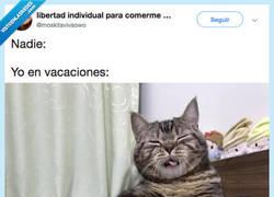 Enlace a Necesito ser como ese gato... NECESITO VACACIONES, por @moskitavivaowo