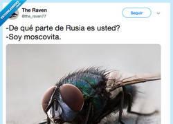 Enlace a El chiste malo del día, por @the_raven77