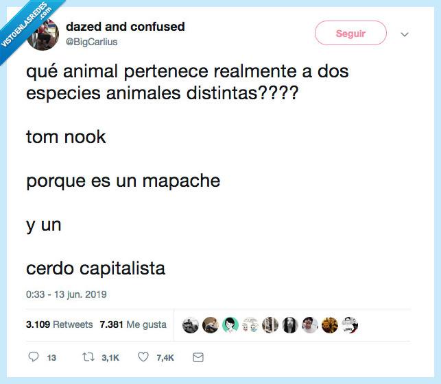 animal,cerdo,mapache,toom nook