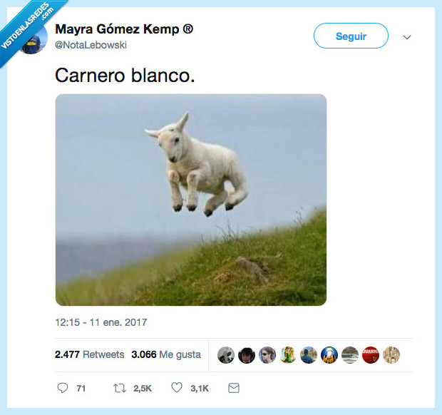 alto,carnero blanco,saltar