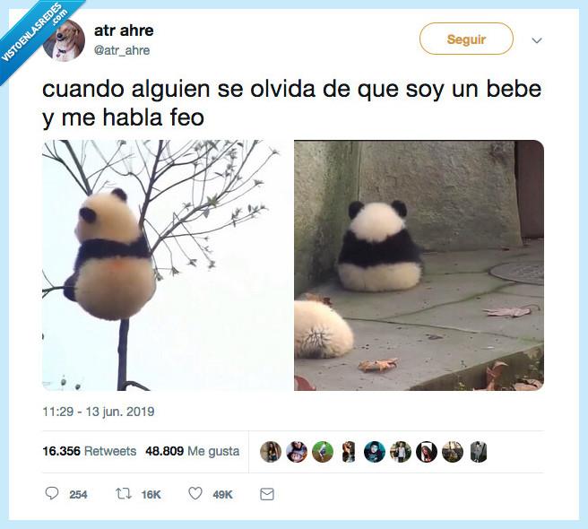 bebe,enfadar,panda