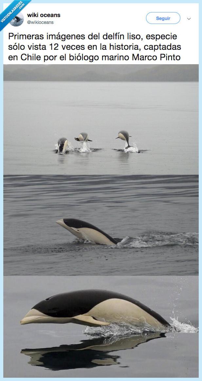delfin,delfin liso,descubrir,imágenes