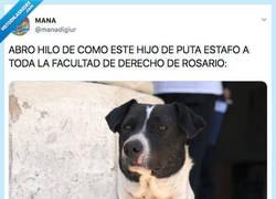 Enlace a Descubren que este perro es el mayor estafador de toda Argentina, por @manadigiur