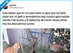 Enlace a El gato infiltrado, por @FranRaimonda
