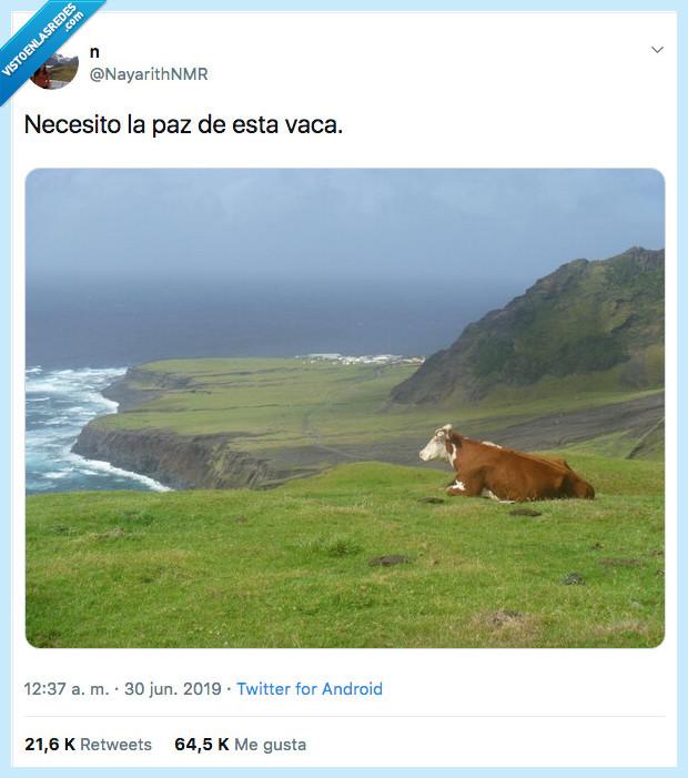 ansiedad,paz,vaca
