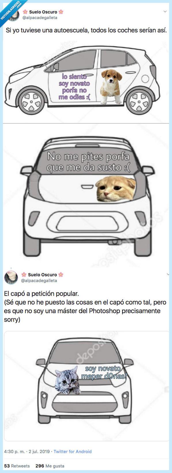 autoescuala,coches,gato,perri,ser así