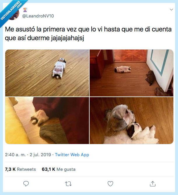 desmayo,perro,tumbar,vida